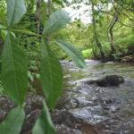 Rivière à truite de Navarre (espagne)